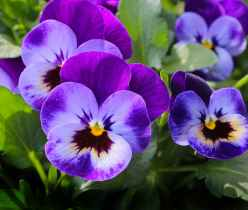nature flowers plant spring