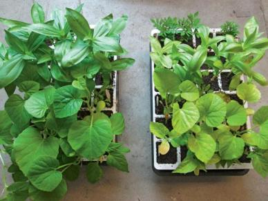 fertilized vs unfertilized plants
