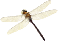 Dragonfly_PNG_Clipart-2427.png