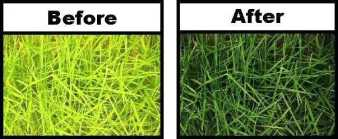 ironite-lawn-fertilizer-hi-yield-iron-plus-grass